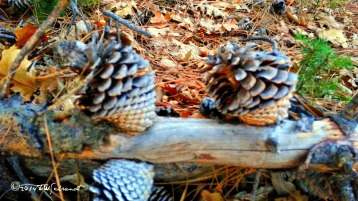 Double cones