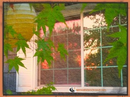 October Maple Reflection